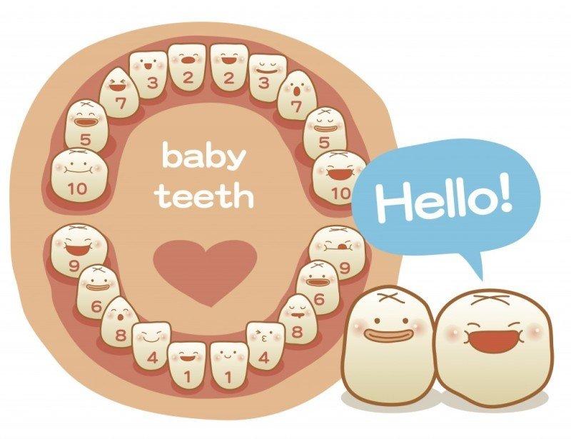 dentição dos bebês