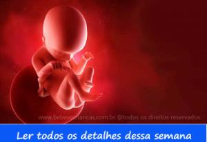 A formação do bebê semana a semana - 18 semanas de gravidez - Acompanhe sua gravidez semana a semana
