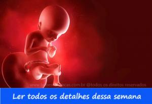 A formação do bebê semana a semana - 21 semanas de gravidez - Acompanhe sua gravidez semana a semana