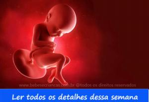A formação do bebê semana a semana - 32 semanas de gravidez - Acompanhe sua gravidez semana a semana