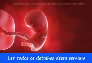 A formação do bebê semana a semana - 9 semanas de gravidez - Acompanhe sua gravidez semana a semana