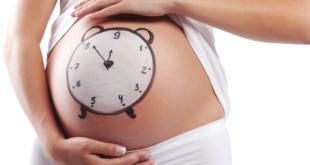 calculadora da gravidez - calculadora gestacional 100% segura